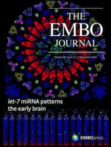 embj.v39.21.cover